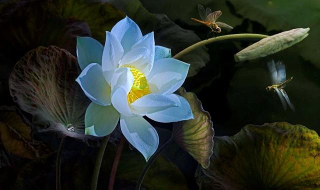 55 điều hạ liệt, chịu phần tai hại - Lời Phật dạy.